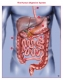 Human digestive system