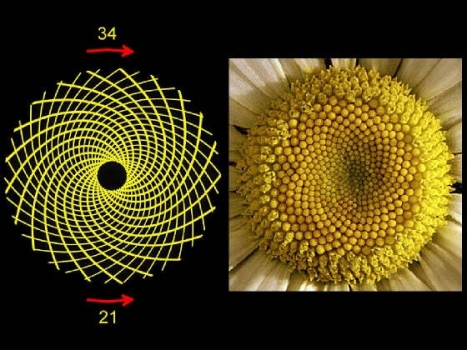 Flower Patterns and Fibonacci Numbers