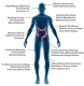 What water does for your body